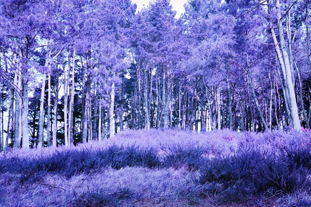 Canon AE1 & film Lomography Lomo Purple